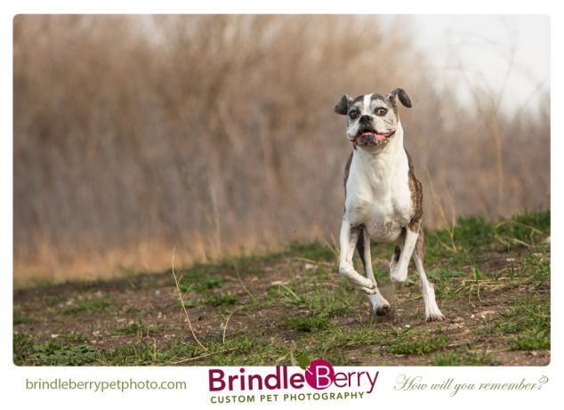 Brindel Running