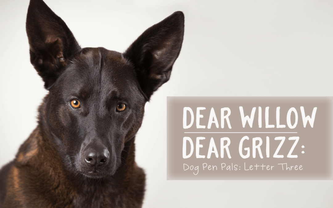 Dear Willow | Dear Grizz: Letter Three