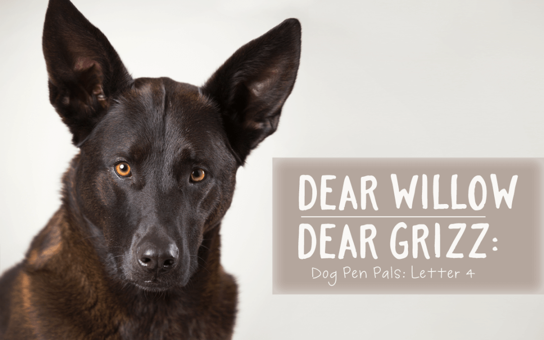 Dear Willow | Dear Grizz: Letter Four