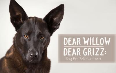 Dear Willow   Dear Grizz: Letter Four