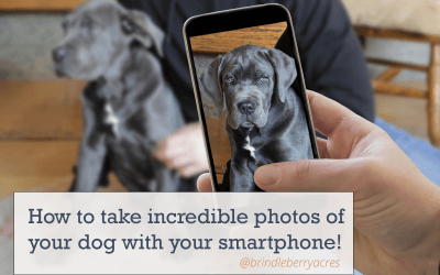 How to Take Incredible Photos of your Dog with your Smartphone