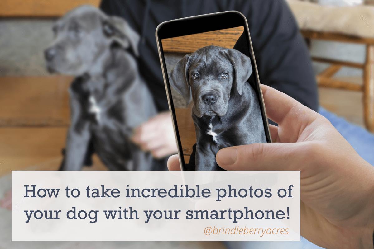 Boxer Smartphone