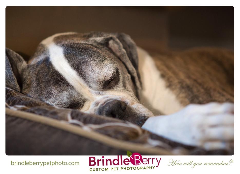 Brindel Sleeping