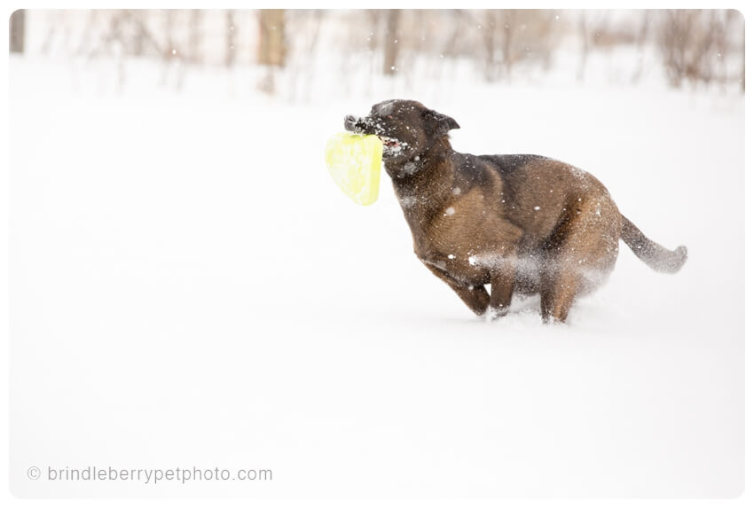 You may be tired of the snow, but this guy isn't!