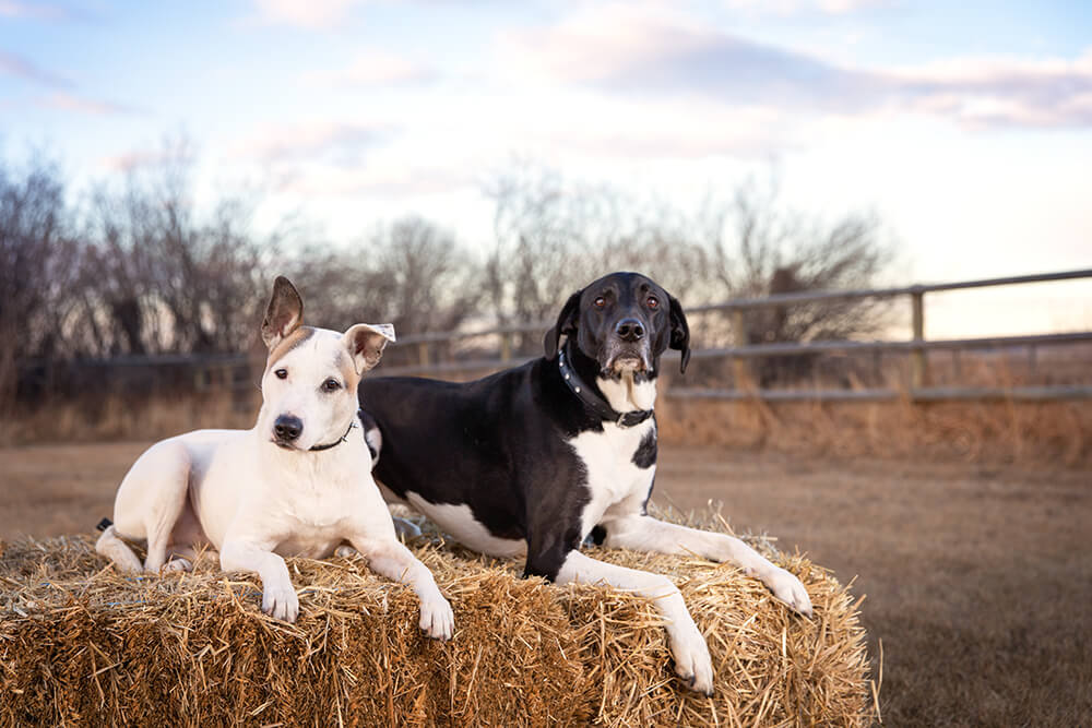 Poe & Sully's DeWinton Photo Session [Outdoor Dog Photography]