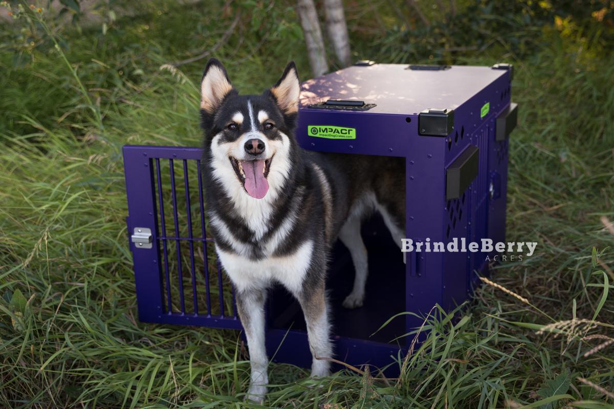 HUSKY DOG CRATE