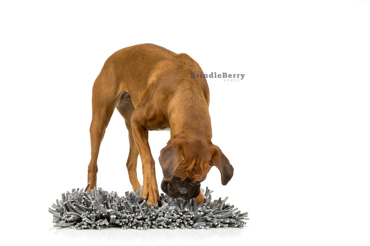 BOXER DOG SNUFFLE MAT