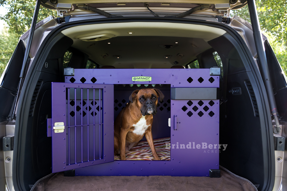 Stationary Side Door Impact Dog Crate