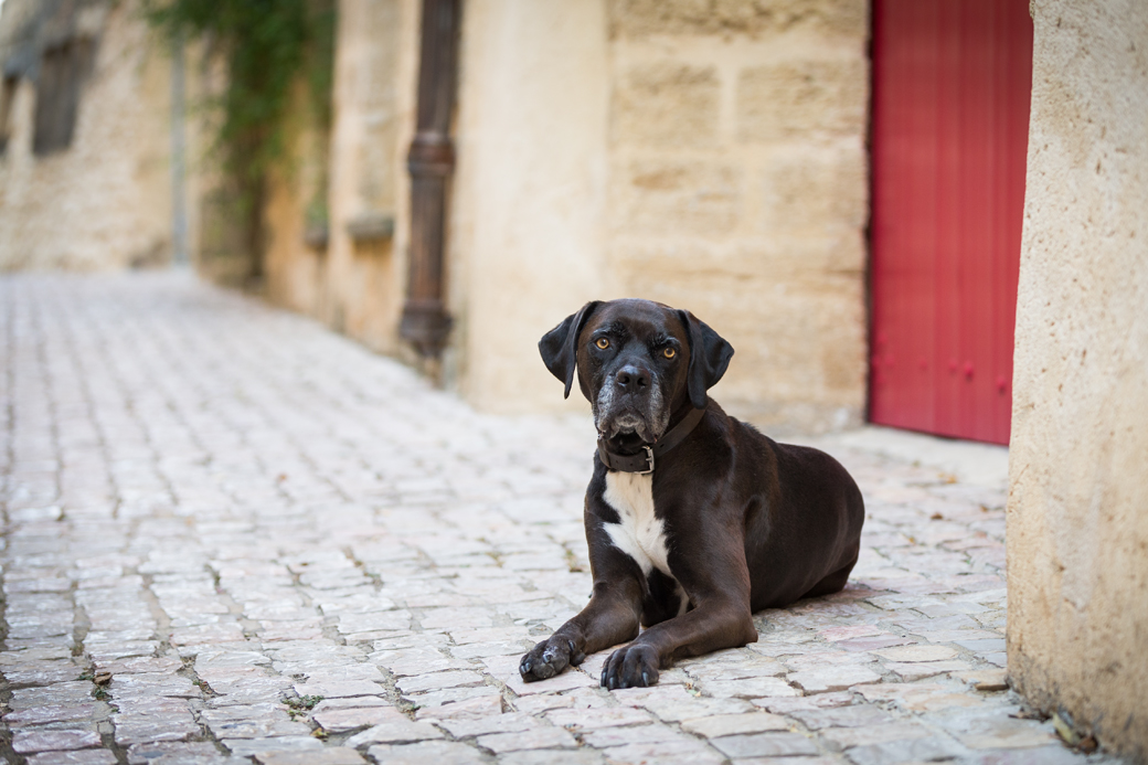 How a trip to France helped me better understand fear and anxiety in dogs