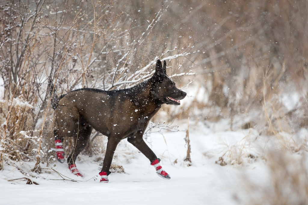 The Top Five Very Best Dog Boots for all Seasons