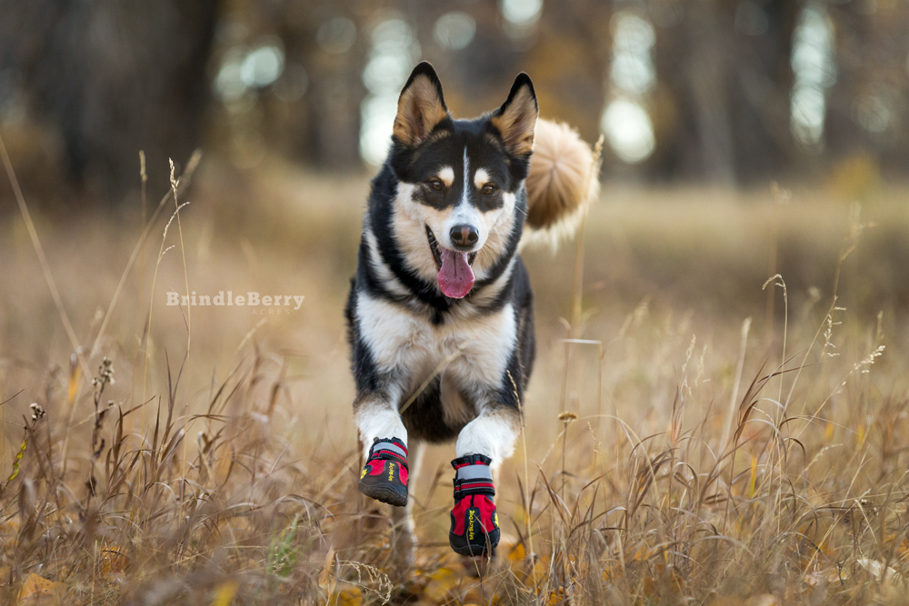 HUSKY RUNNING DOG BOOTS