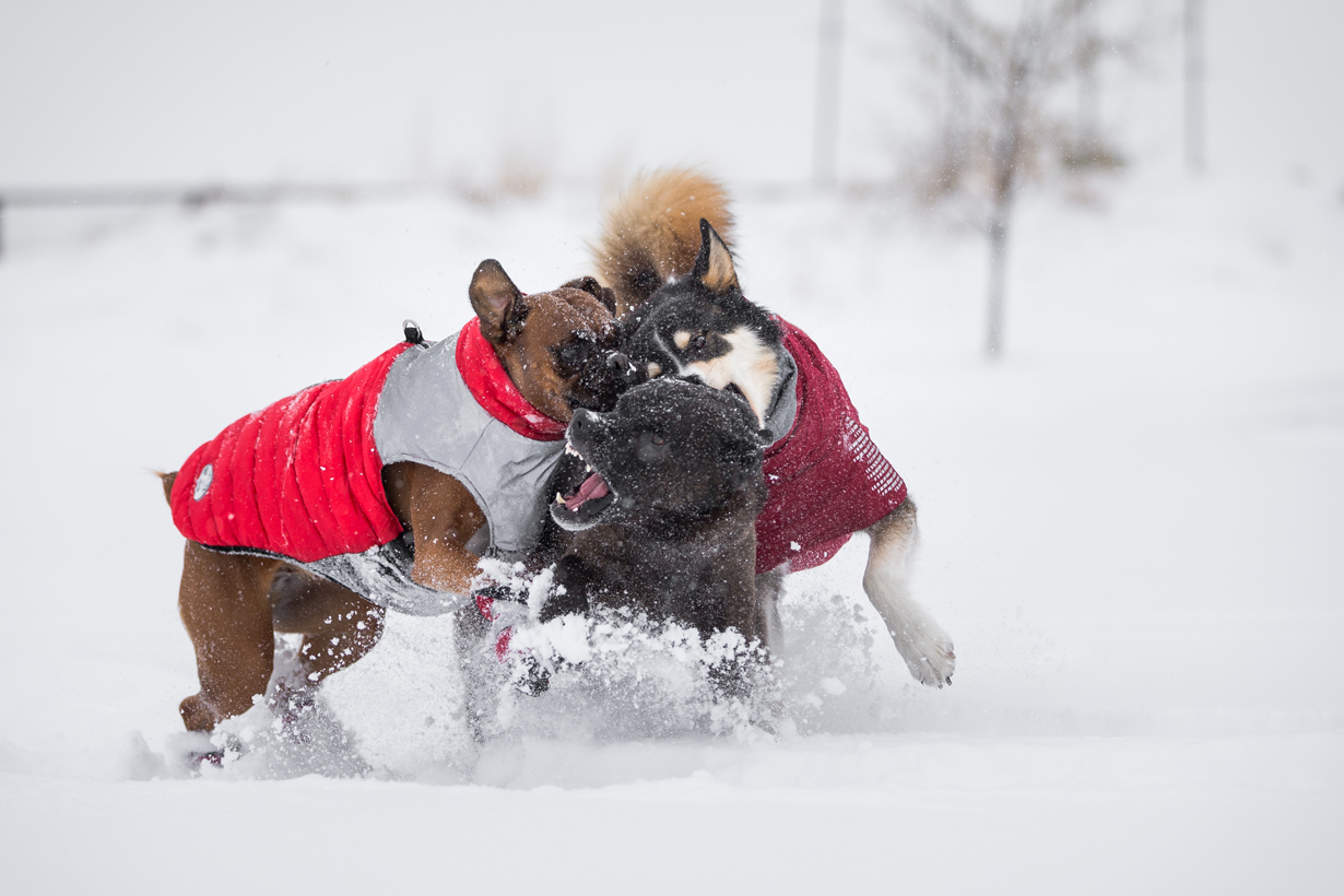 DOGS PLAYING WINTER GEAR