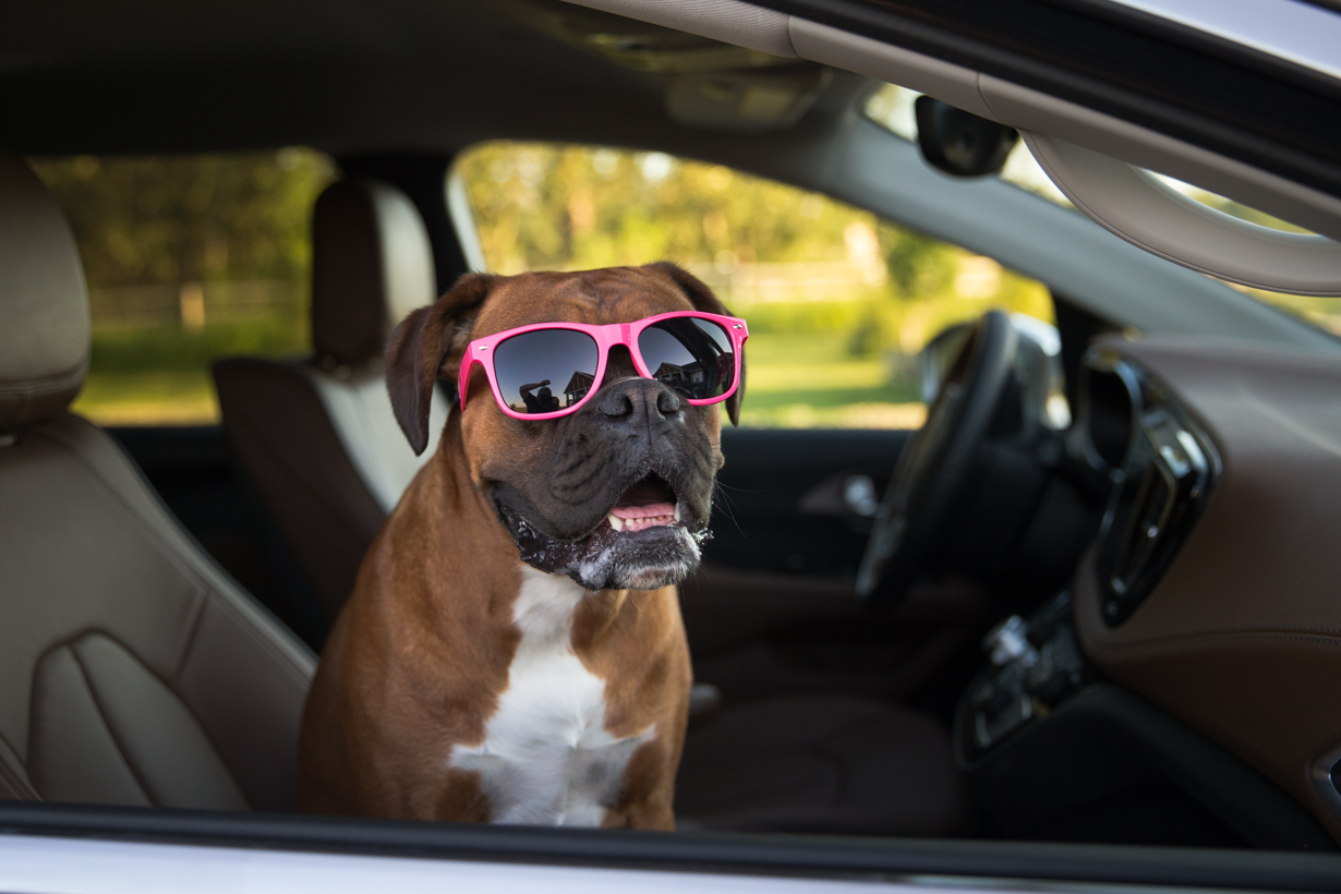 Why a Mini Van is the Best Dog-Mobile You'll Ever Own!