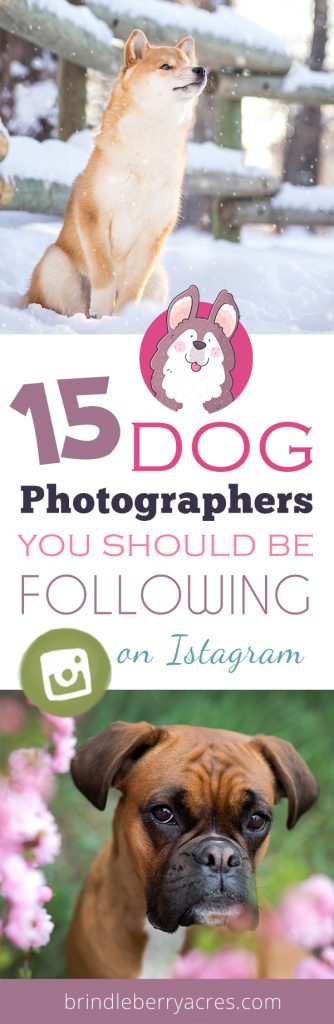 DOG PHOTOGRAPHERS