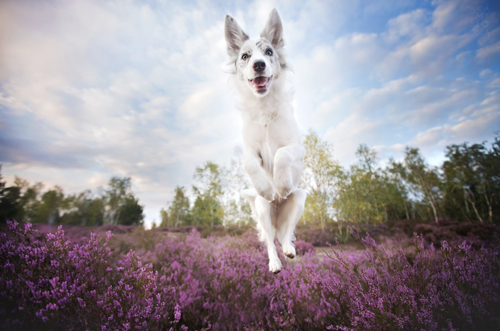 12 Incredible Dog Photographers You Should Be Following On Instagram Calgary Pet Dog And Equine Photographer