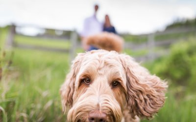 The best private off-leash dog parks around Calgary
