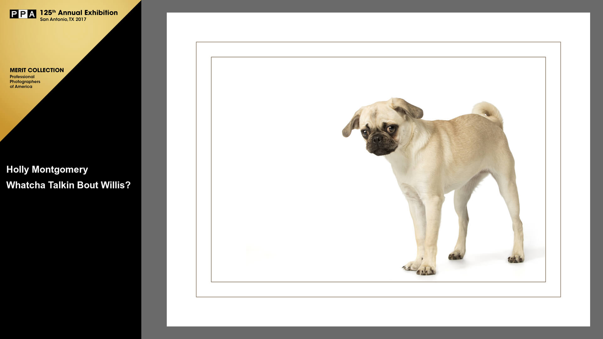 pug isolated white