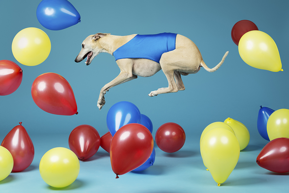 Toby - Fastest time to pop 100 balloons by a dog 3614