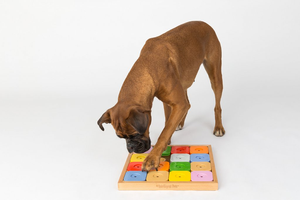 Boxer Dog Playing with Puzzle Toy