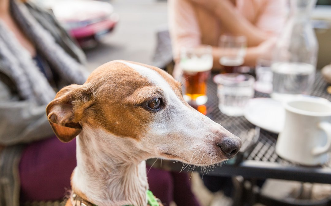 A complete list of dog friendly patios in Calgary