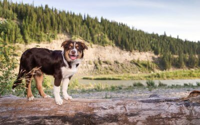 Fenriz's Calgary Photo Session [Outdoor Dog Photography]